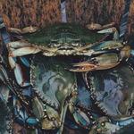 Thumb crabs